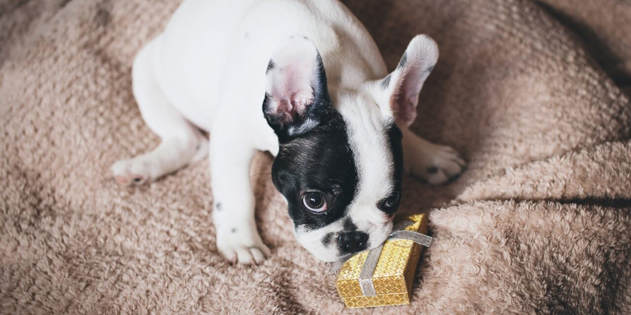 11 Mother's Day Gifts from the Dog She'll Love