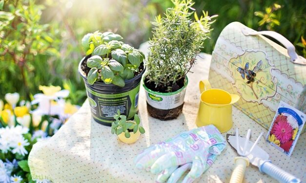 11 Ideal Christmas Presents for Gardeners