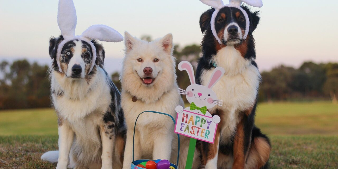 Easter gifts for the Dog –  wooftastic ideas for Easter